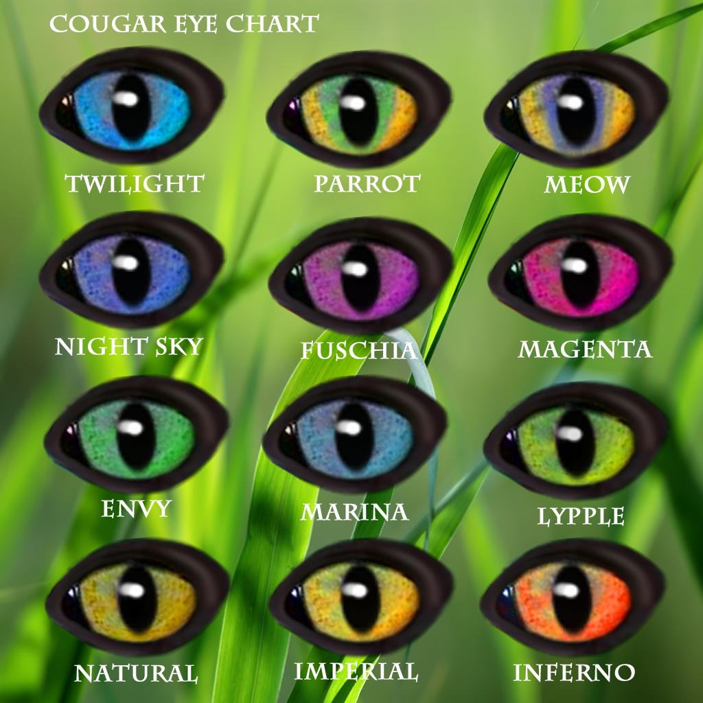 Tiger Hybrid Eye Types | wildkajaer...