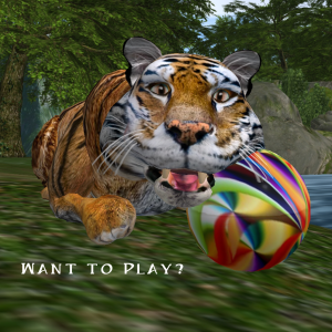 Tigers are a happy cat that loves to play