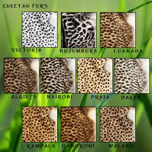 Cheetah Fur Traits