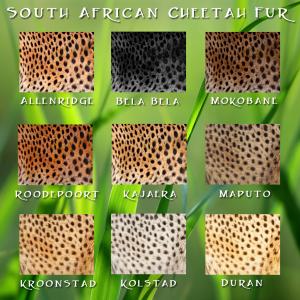 Cheetah South African Fur