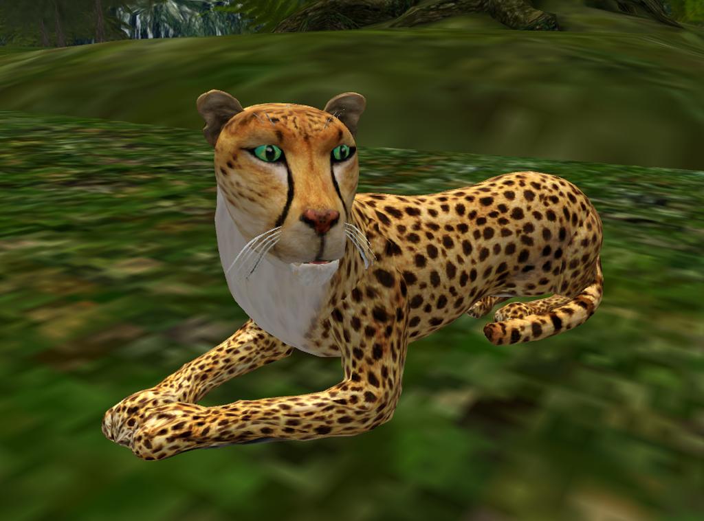 Cheetahs In Final Testing Wildkajaerablog