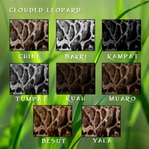 Clouded Leopard Furs