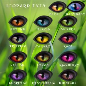 Leopard Eyes2