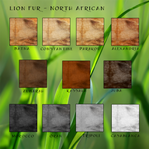 Lion Fur North African