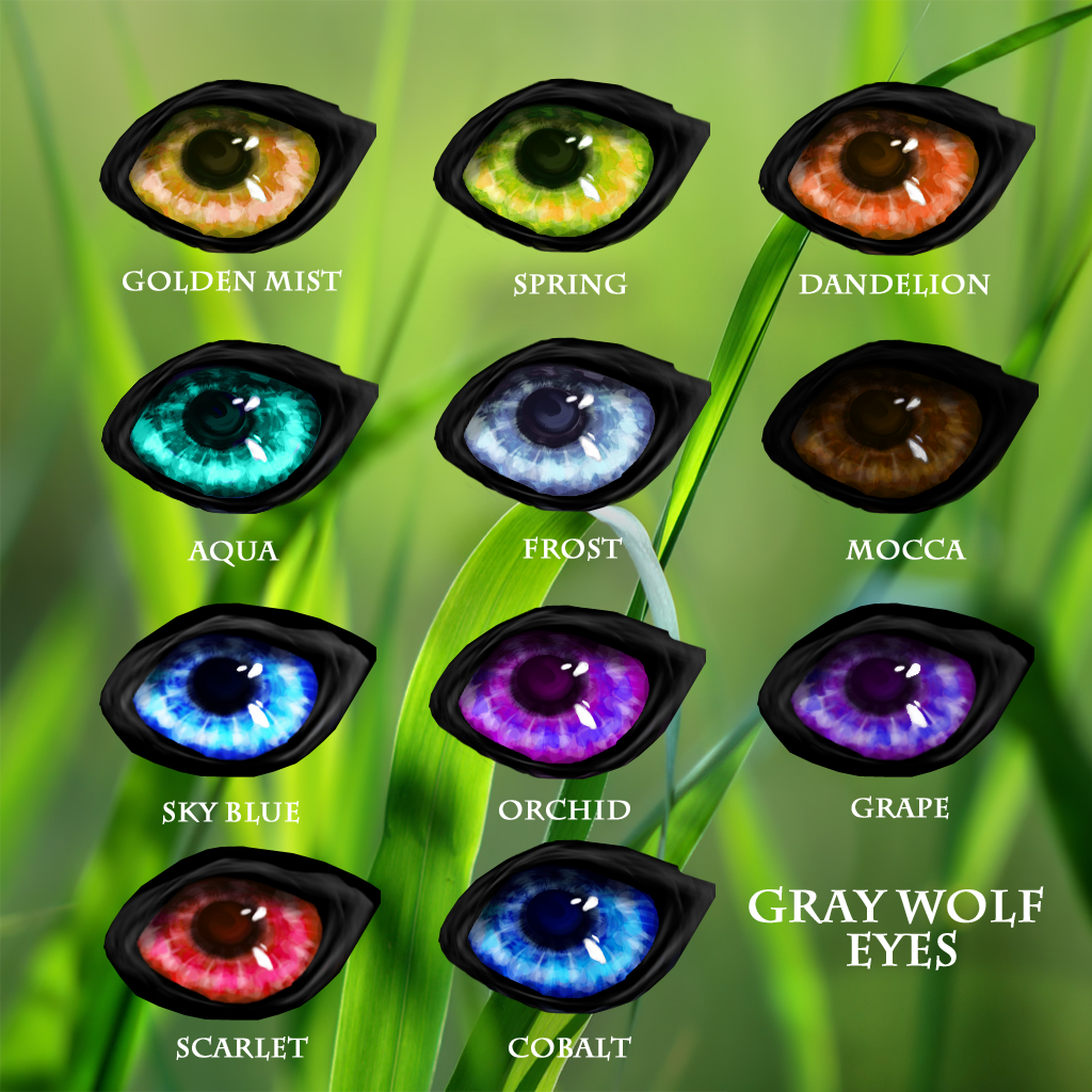 Eye types wildkajaerablog wolf eyes grey11fixedtraits copy geenschuldenfo Images
