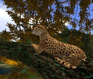 TreeFall_003