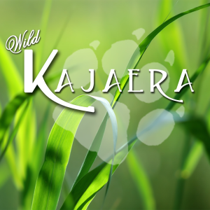Wild Kajaera