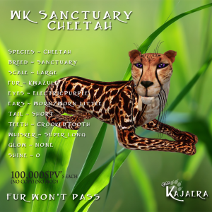 WK Sanctuary Cheetah