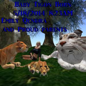 Tigon Birth 51814