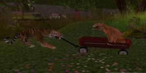kitties play