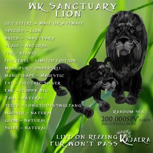 WK Sanctuary Lion