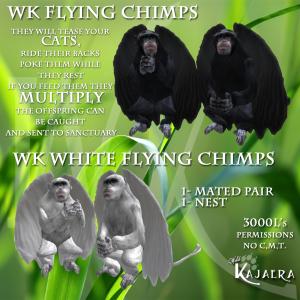 WK Chimps