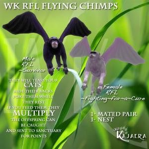 WK RFL Chimps