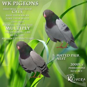 WK Pigeons