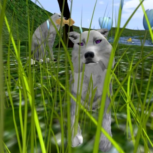 Wolf In Tall Grass