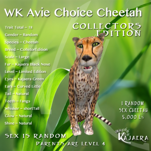 WK Avie Choice Cheetah