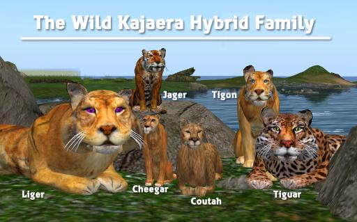 WK Hybrid Family