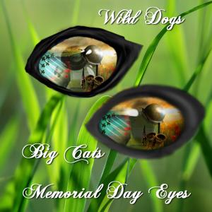 MemorialDay Eyes 2015