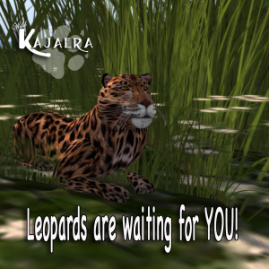 Leopards are here