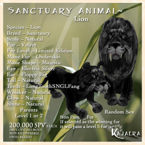 Sanctuary African Lion