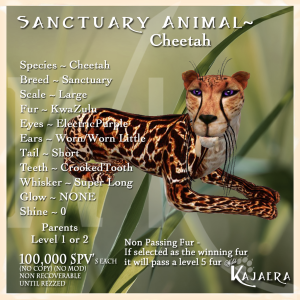 Sanctuary Cheetah