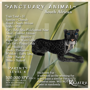 Sanctuary S. African Cheetah