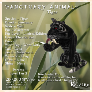 Sanctuary Tiger
