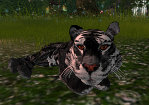 amur-tiger-coal-dust