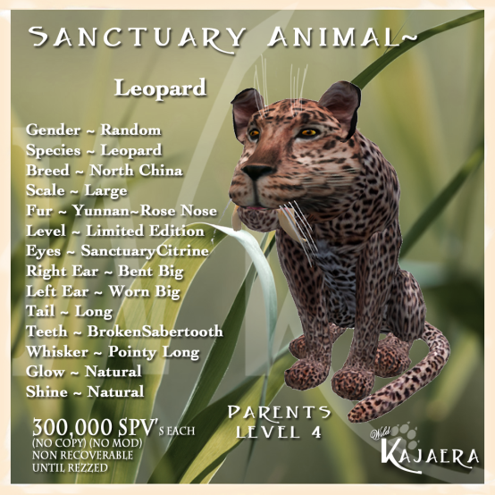 Leopard Sanctuary Cat
