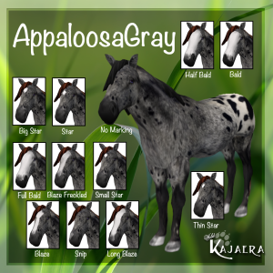 AppaloosaGray