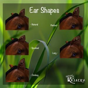 Ear Shapes