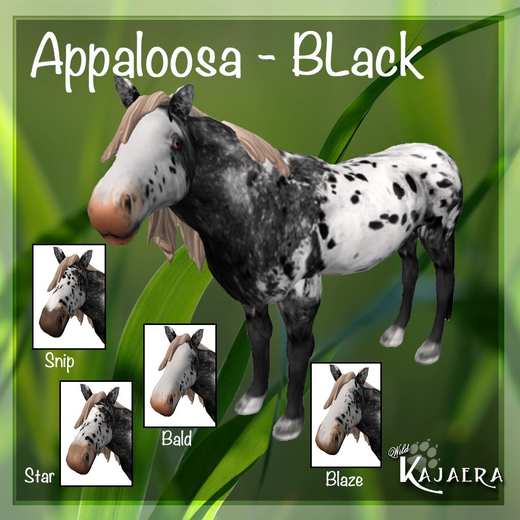 Appaloosa Black