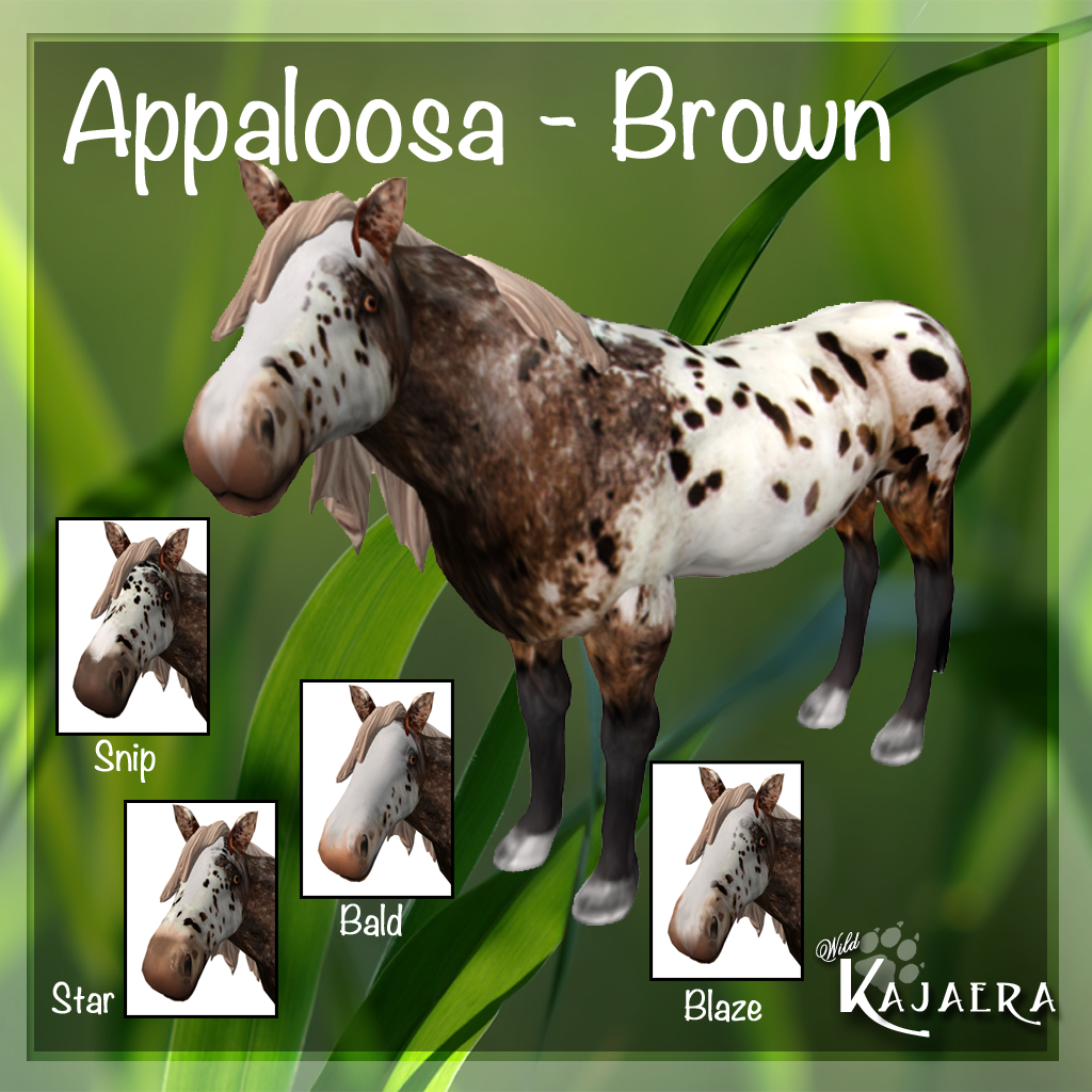 Appaloosa Brown
