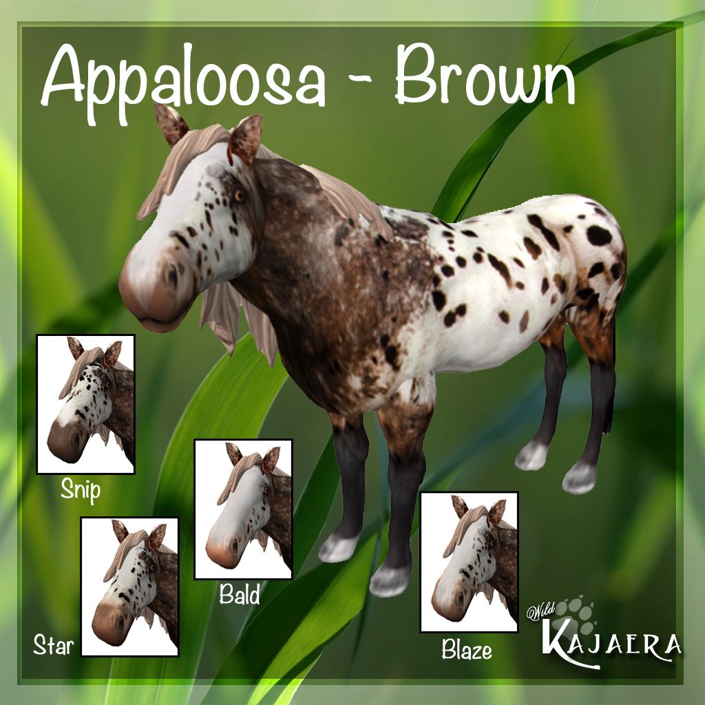 Appaloosa Brown
