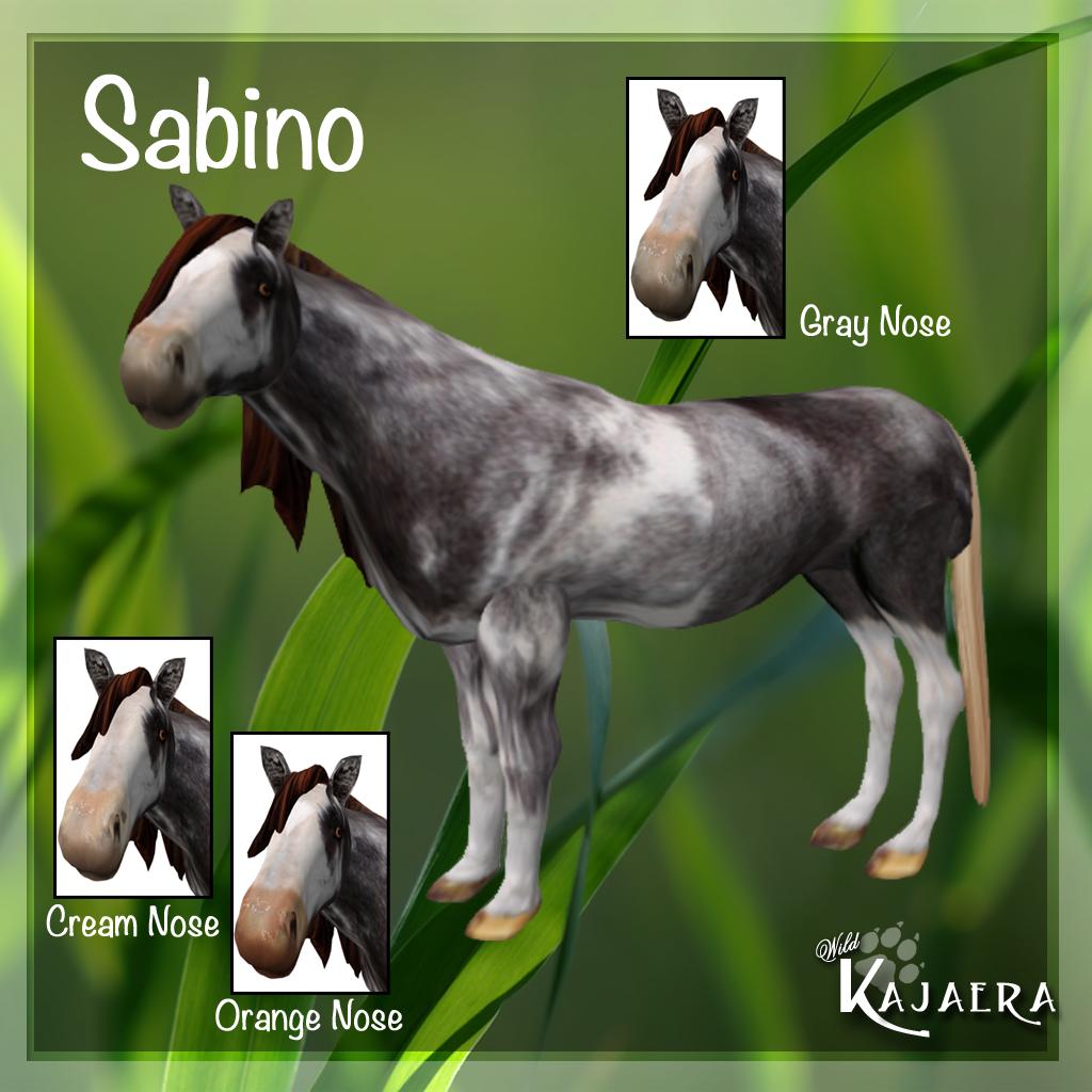 Sabino Coat