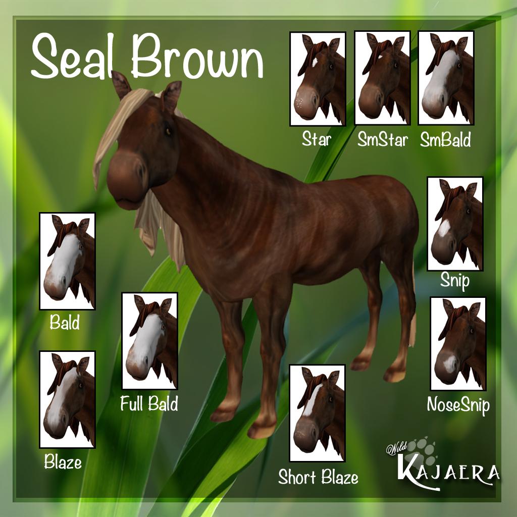 SealBrown Coat