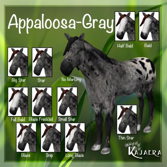 Appaloosa Gray