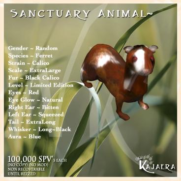 Sanctuary Black Calico Ferret