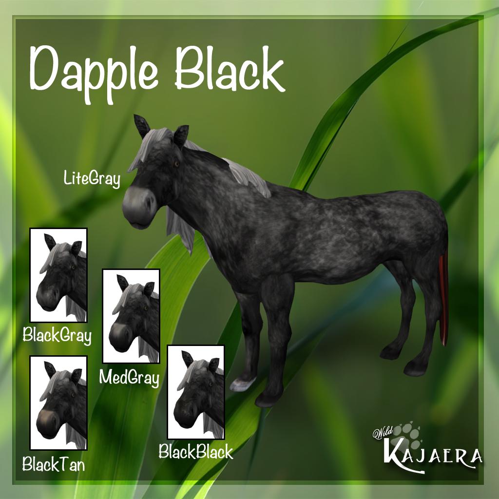 Dapple Black