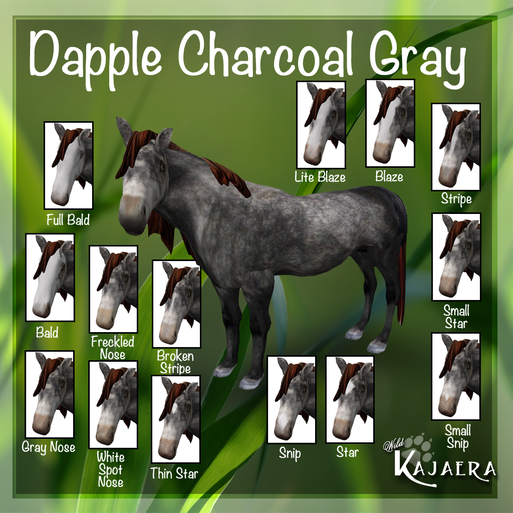 Dapple Charcoal Gray