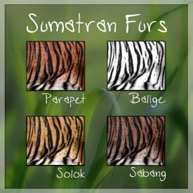 SumatranFurs2018